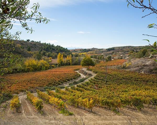 Ondarre wijngaard