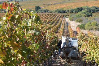 Wijngaard Palo Alto