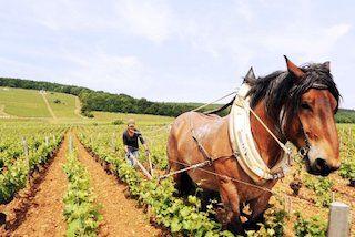 Bio-dynamische wijnbouw
