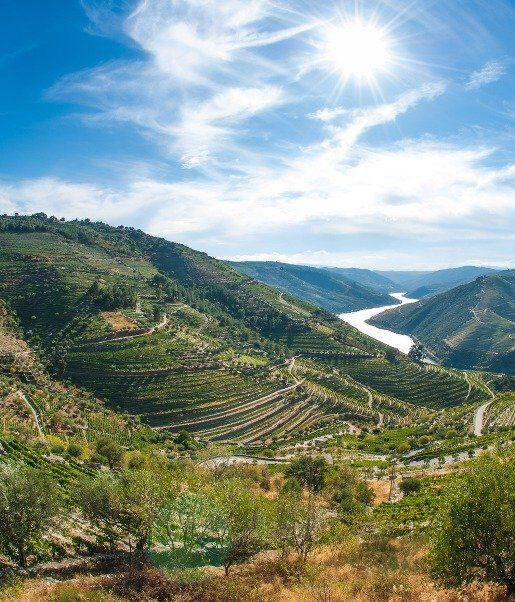 wijngaard Portugal