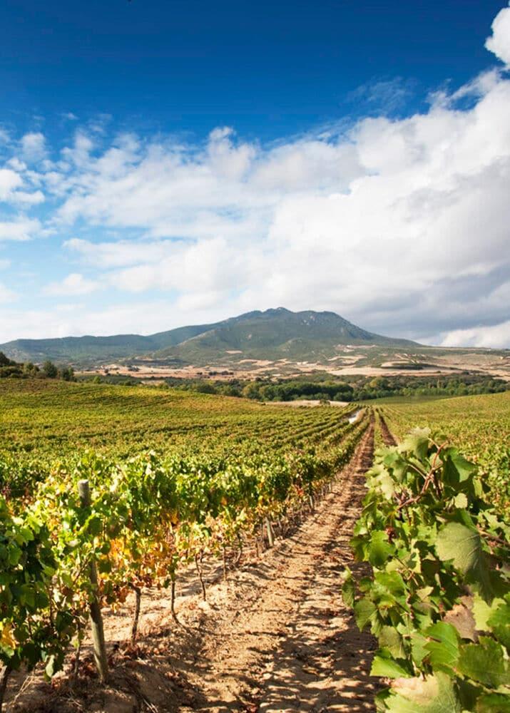 De wijngaard van chivite