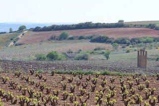 Grandes Vinos wijngaard