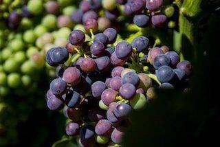 Grandes Vinos druiven