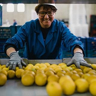 citroenen plukken
