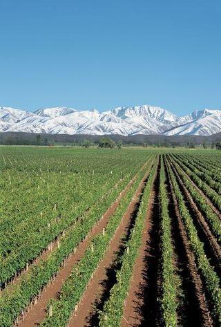 wijngaard Argentinië