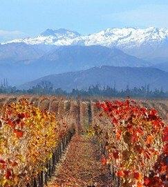 wijnstreek in chili