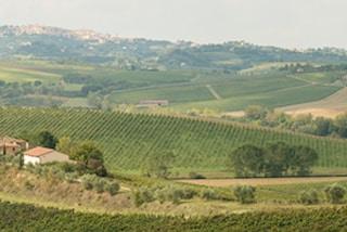 Wijngaard Piemonte