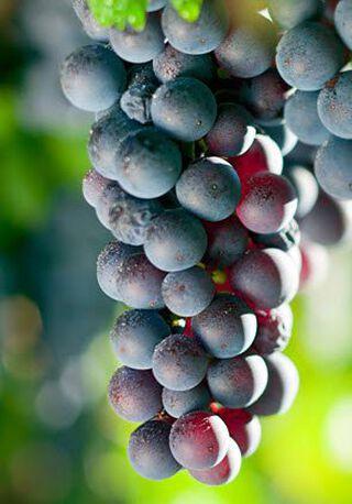 druiven uit Argentinië