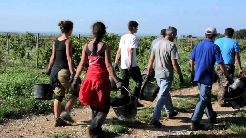 Gall & Gall: Montirius - De beste biodynamische wijnen