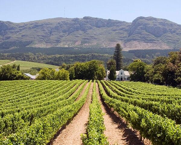 Zuid-Afrika: Constantia