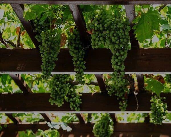 duurzame wijn