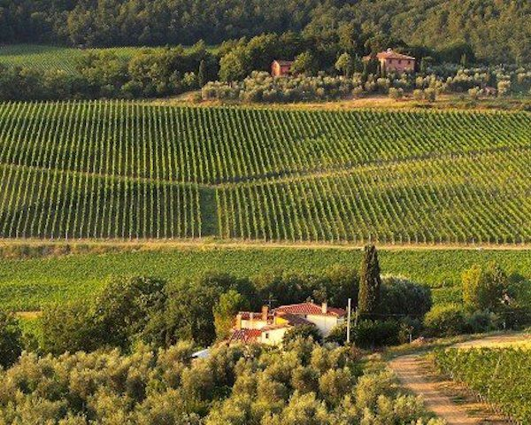 Frescobaldi wijngaard