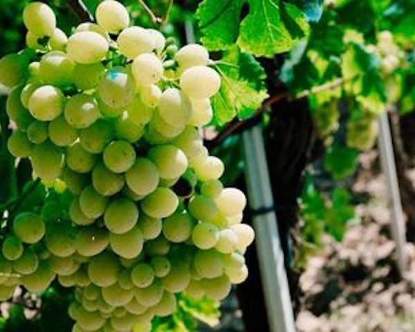 Wijnen uit Rueda