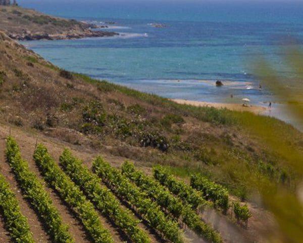 Inycon wijngaard