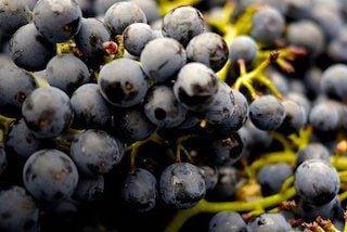 Dit zijn de 9 edele rode druiven