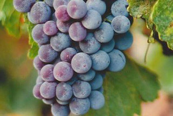 wijnweetjes