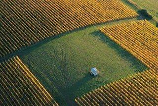 chili wijngaard