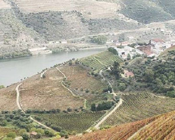 Kopke wijngaarden
