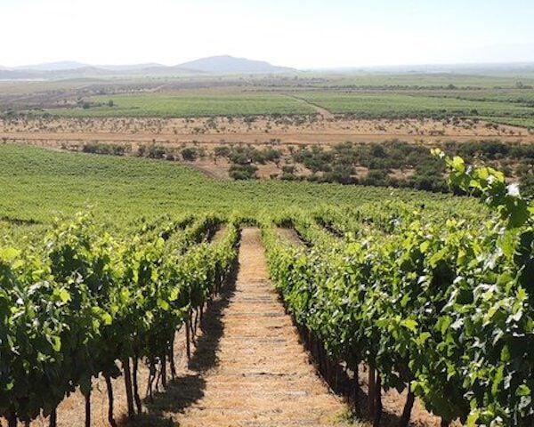 wijngaard in Argentinië