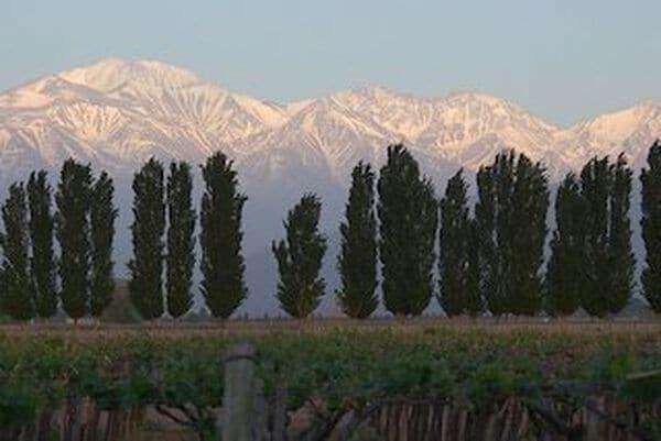 wijnhuis Mendoza