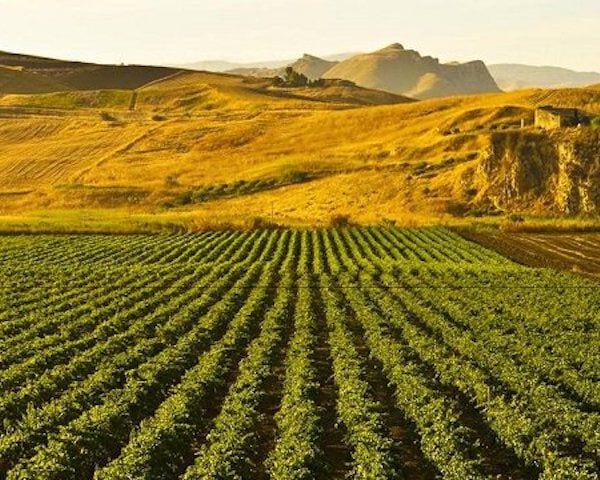 Van kwantitatieve naar kwalitatieve Sardinische wijnen