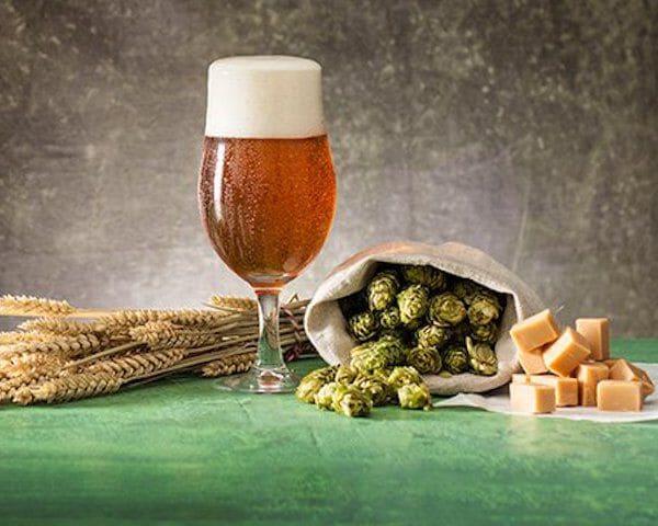 bier hop kaas