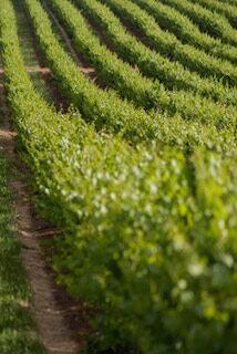 Nieuwe wijnlanden: Slovenie, Kroatie en Turkije