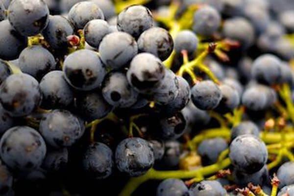 Primitivo wijn