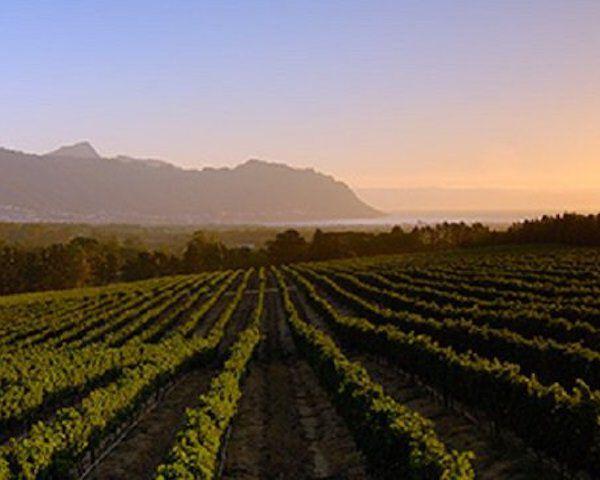 Kumala wijngaard