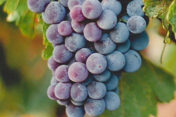 Wijnweetjes over Malbec
